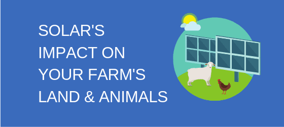 Solar's Impact on Your Farm's Land and Animals