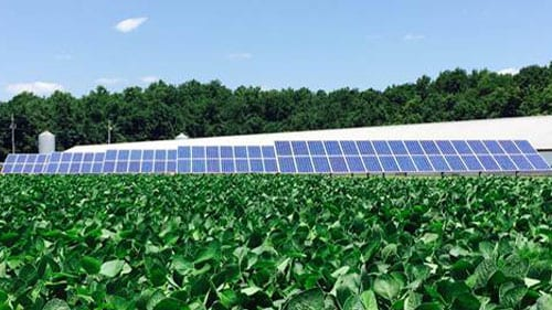 ground mount solar panels on delmarva farm