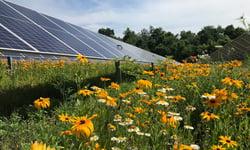 denison-university-solar-array